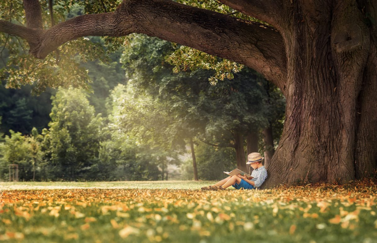 boy reading picture books outdoors under tree